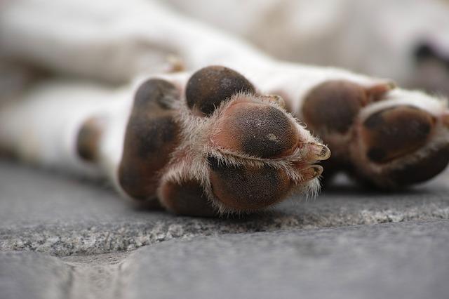 lutto perdita animale domestico eutanasia